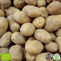 Pommes de terre (le kg)